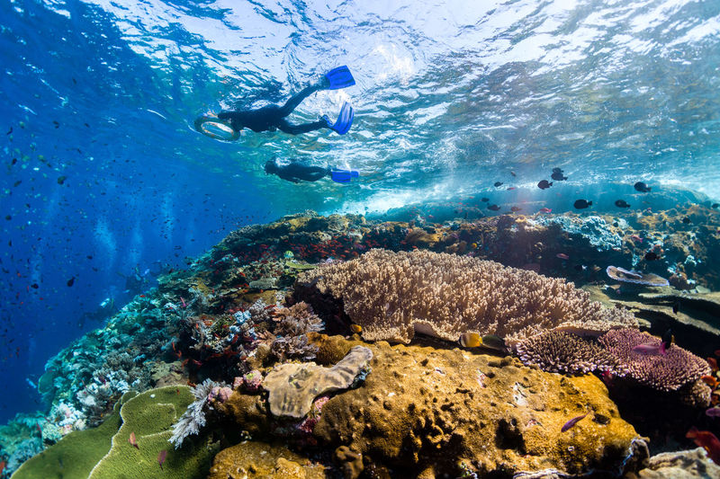 indonesia Underwater Sea UnderSea Water Sea Life Sport Adventure Coral Animal Wildlife Exploration Animal Animals In The Wild Swimming Animal Themes Aquatic Sport Scuba Diving Marine Invertebrate Vertebrate Nature Underwater Diving Snorkeling Outdoors