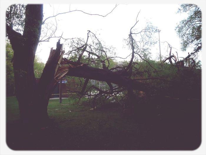 When lightning crashes Tree Park