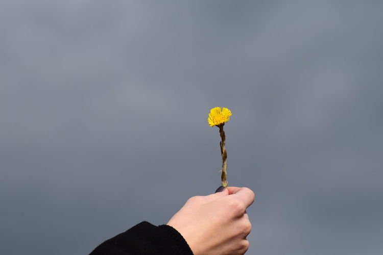 Close-up of cropped woman hand holding yellow flower