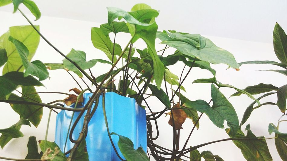 EyeEmNewHere Leaf Plant Growth Green Color Branch Nature Tree No People Beauty In Nature Day Close-up Freshness Fabruary Winter Indoors  School Life  School Modern