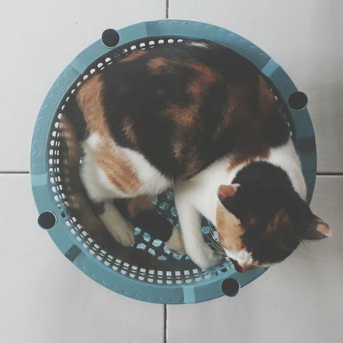 Pets Tiled