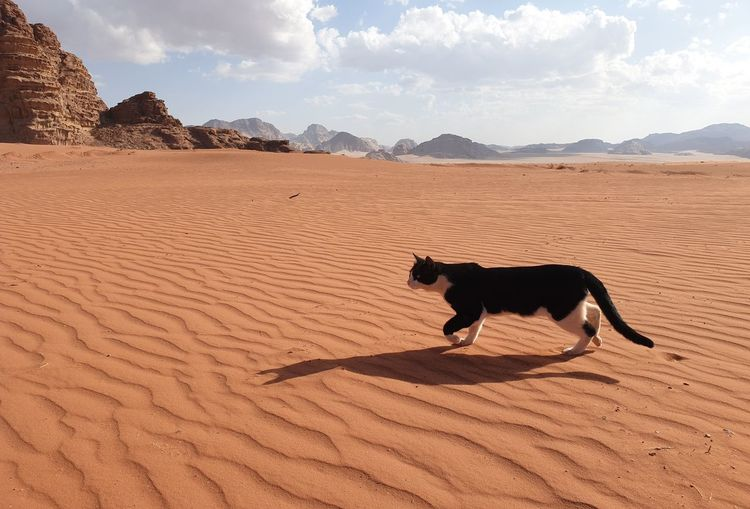 Dog lying on sand