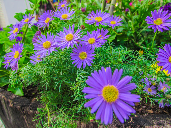 Beauty In Nature Blooming Close-up Day Flower Flower Head Fragility Freshness Growth Nature No People Outdoors Petal Plant Sprig Spring