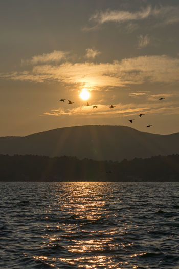 More photos from 2018 in the Berkshires, MA. This was a great year! I gonna miss this place! Hope you enjoy! :-) Sky Water Beauty In Nature Sunset Scenics - Nature Waterfront Sea Sun Mountain Cloud - Sky Tranquil Scene Flying Tranquility Sunlight Nature Idyllic Bird Vertebrate No People Outdoors Goose Golden Hour Kevin Giambertone EyeEmNewHere