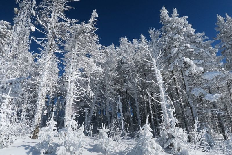 Mont Tremblant. After the snowstorm Mont Tremblant, Qc Skiing Snow❄⛄ Trees