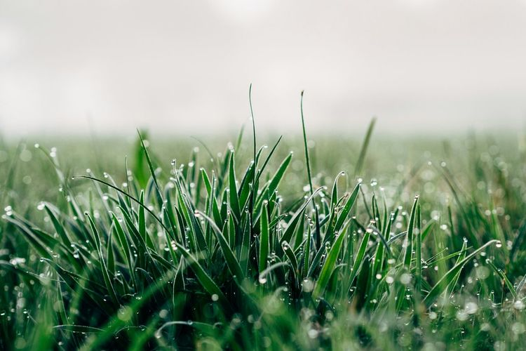 Close-up of wet grassy field against sky