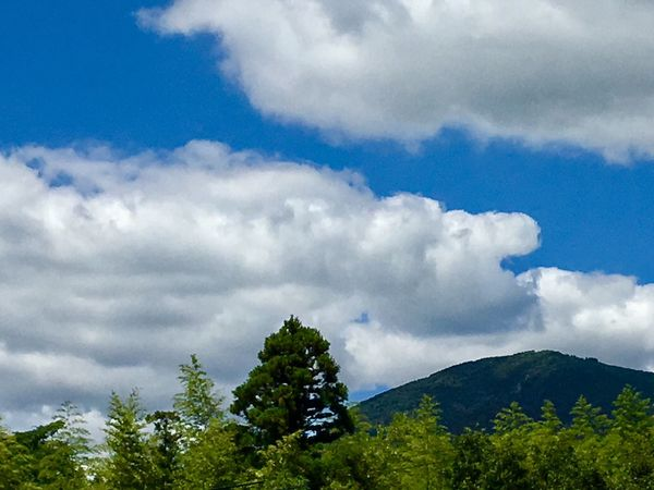 Subject: Sidelong Cumulus Clouds Spreading over Mt. Kotasan. This mountain is about 720 meters high and the highest one in Kurose Town. Sky Cloud - Sky Nature Tree Beauty In Nature Day Low Angle View Forest Scenics Tranquility No People Green Color Outdoors Growth Landscape Mountain . Taken in Higashi-Hiroshima , on Aug. 13, 2017 ( Submitted on Aug. 20, 2017 )