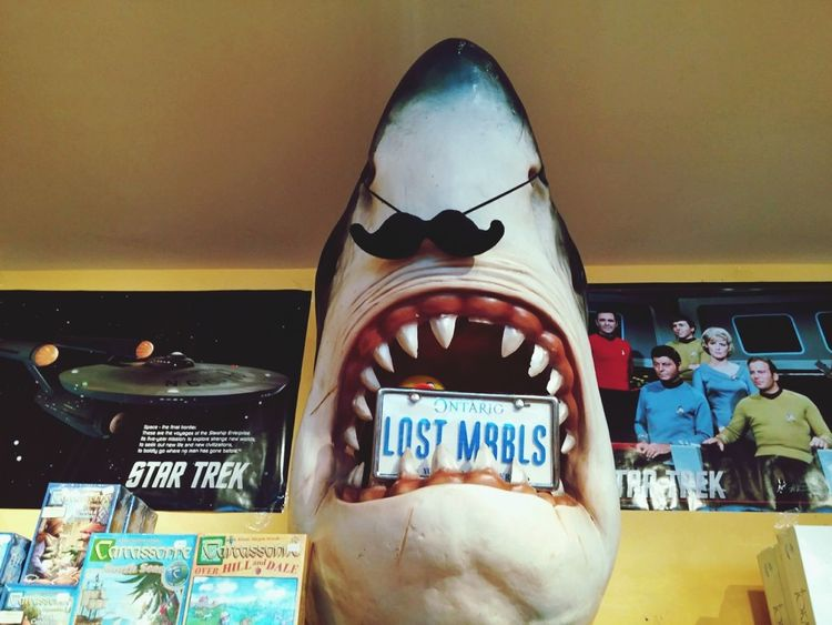 Shark Store Retail  Indoors  No People Geek Nerd Funny Quirky Zany Kitsch Silly Display License Plate Star Trek