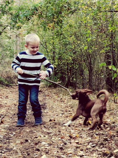 Forest Mansbestfriend Sticksandstones Podenco Memories Nature Lifeisbeautiful Our World Quick Shot Outdoors Fun Tugofwar BestfriendsForEver Lifefriends Partnersincrime Pets Full Length Childhood Dog Standing Tree Blond Hair Cute Striped Casual Clothing One Baby Boy Only Woods WoodLand