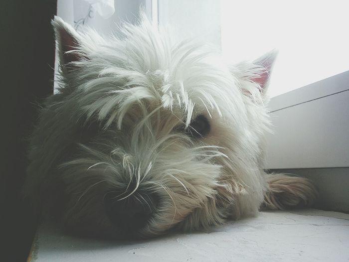 Cute Pets Dog I Love My Dog