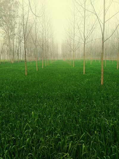 Crops Nature UttarPradesh