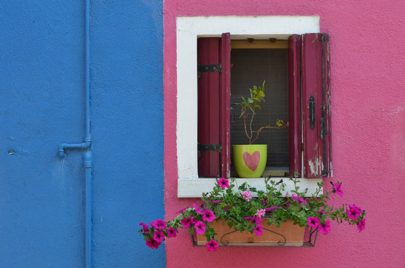 Window box and potted plant on pink wall