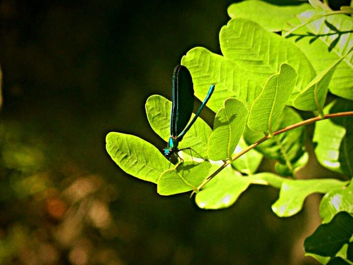 Bugs Nature Hanging Out Plants Life Focus Green Blue