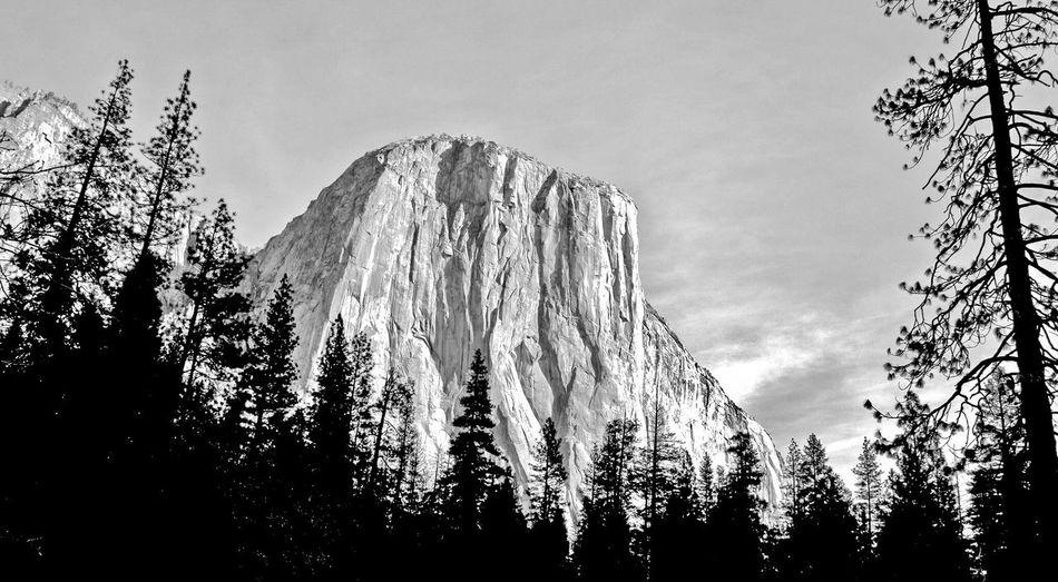 El Capitan Ancient Beauty Black And White Granite Monolith Yosemite National Park Low Angle View Tree No People Beauty In Nature