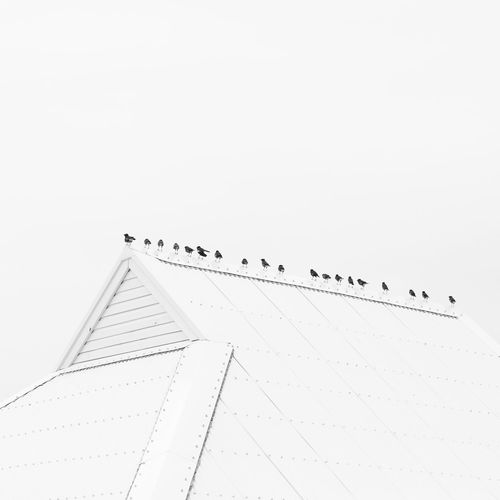 Large Group Of Animals Group Of Animals Vertebrate Sky Clear Sky Bird Animal Animals In The Wild Copy Space Animal Themes