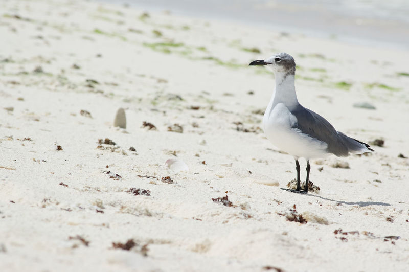 Seagull perching on sand