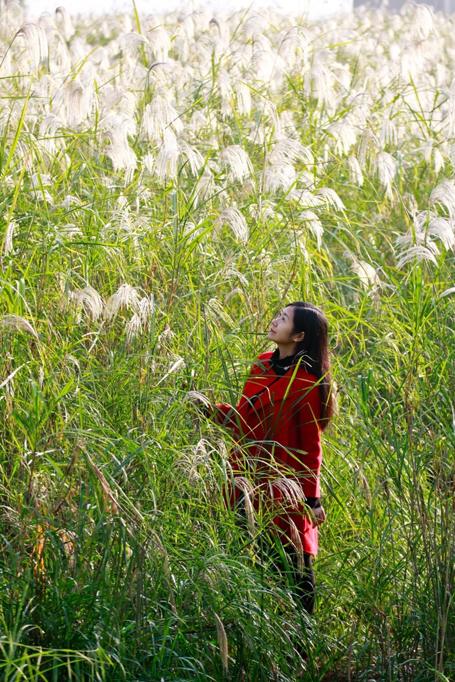 grass, one person, only women, tree, outdoors, beauty, one woman only, adult, young adult, adults only, young women, people, nature, one young woman only, day