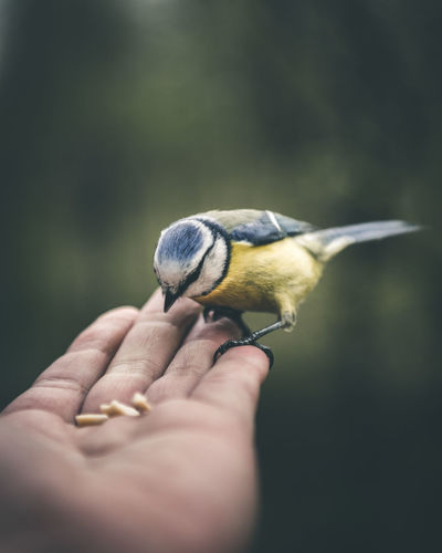 Helping Hand Animal Wildlife Animals In The Wild Bird Finger Focus On Foreground Hand Human Hand One Animal Outdoors