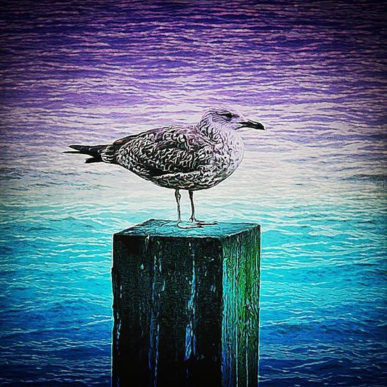 Having Fun River IPhone Water Nature Fun IPhoneography Beautiful Love Bird Taking Photos Colors Photo Photography Daydreaming Wildlife Hello World Mobile Love Gang_family