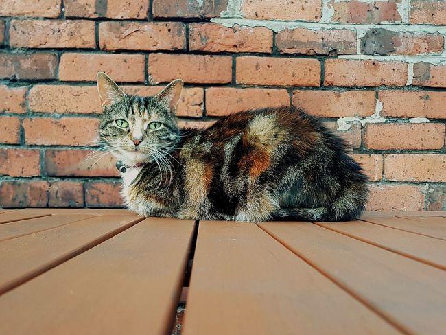 Cat Lovers Cats Of EyeEm Cat♡ Brick Wall