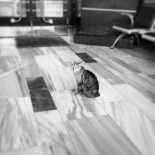 Ankara Trengarı TCDD Cat Blackandwhite B&w Photography Photography Photoshoot