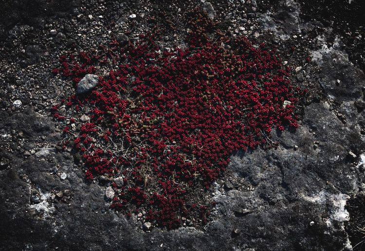 Even Stones Have A ❤️ | EyeEm Gallery EyeEm Nature Lover Sweden Alvaret Öland Showcase May Eye4photography  Heart Naturelovers Plant Nature Red