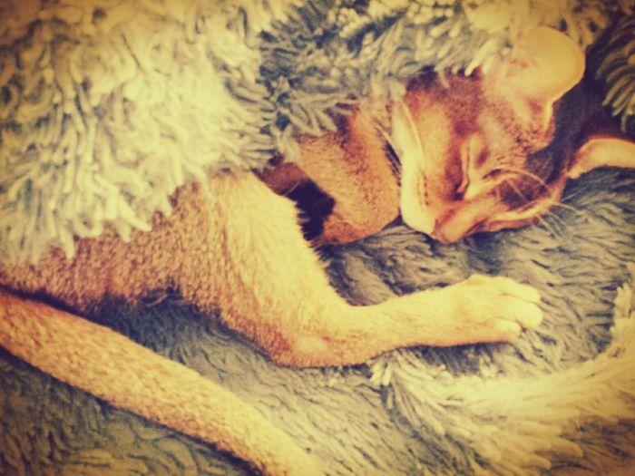 Lyly Pad Cat Snuggles
