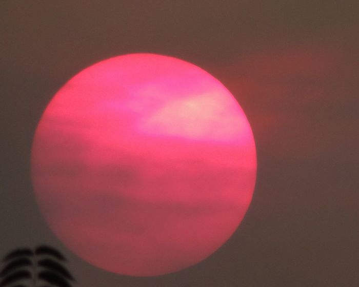 Bright Close-up Pink Pink Sun Pink Sunset Sky Sun Sunset Sunset Silhouettes Sunset_collection