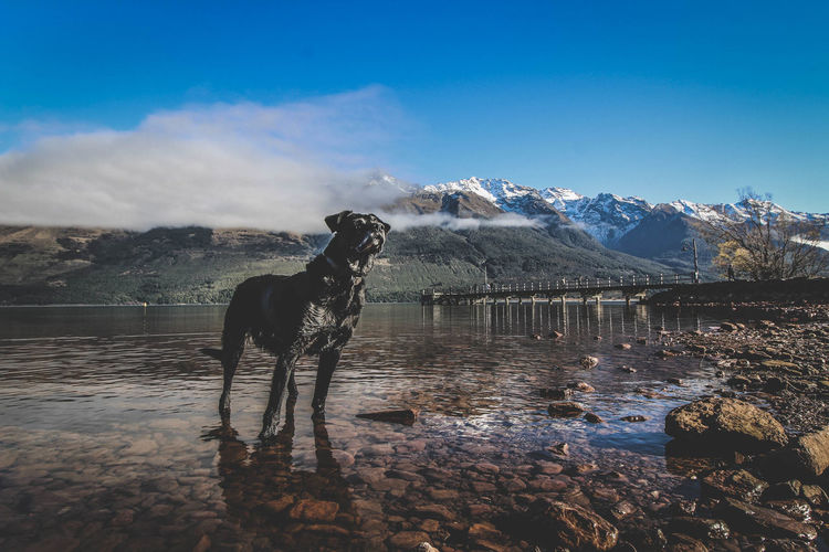 Dog standing by lake against sky