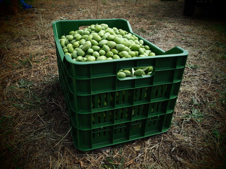 Agriculture Day Farming Equipment Food Food And Drink Freshness Fruit Green Color Green Olives Halkidiki Healthy Eating High Angle View No People Olives Outdoors Stack