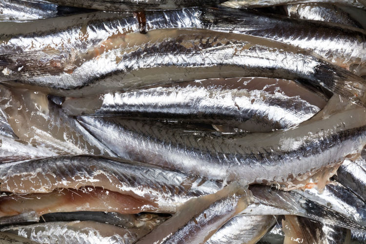 Full frame shot of anchovies