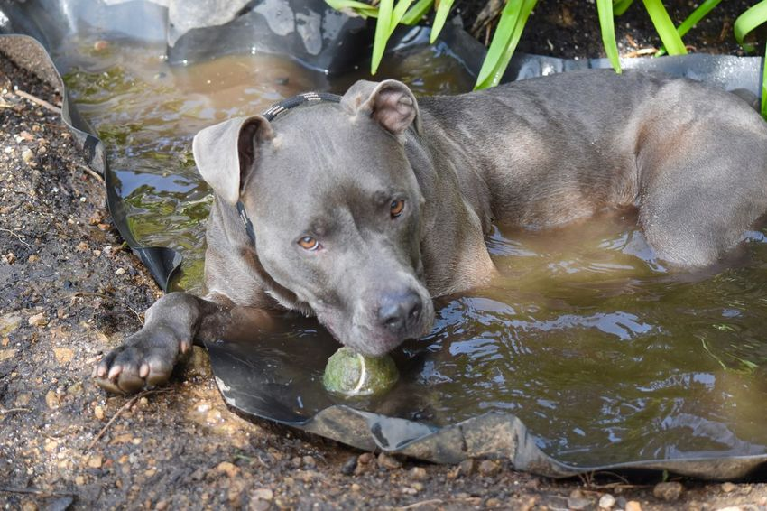 My Dog My Life Big Sur, California Makadoo ( Makayla ) Taking A Dip after Playing With Her Ball Man Made Pool Taking A Break Landscape #Nature #photography Dirty Water  Dirty Dog Happy Dogs love her so much Good Dog Loves Kids Loves To Play