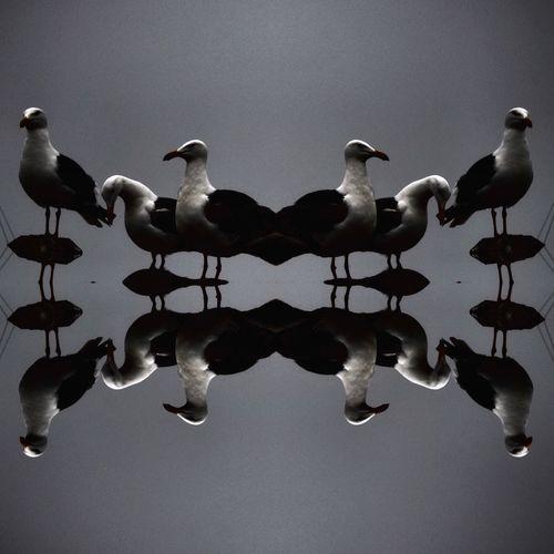 Flock of birds against clear sky