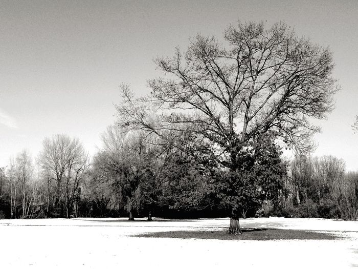 Boscoincitta Snow Milano Hugging A Tree Countryside Blackandwhite