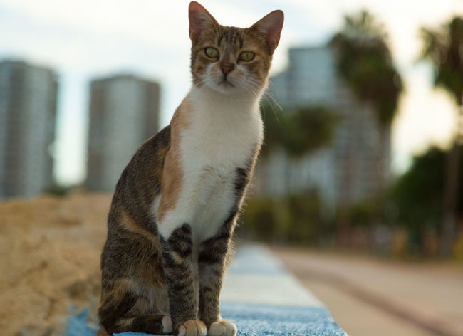 Street Cats Animal Themes Boulder Cats Close-up Coastline Day Domestic Animals Domestic Cat Feline Feline Portraits Focus On Foreground Looking At Camera Mammal Mersin Turkey No People One Animal Outdoors Pets Portrait Rock Formation Street Cats
