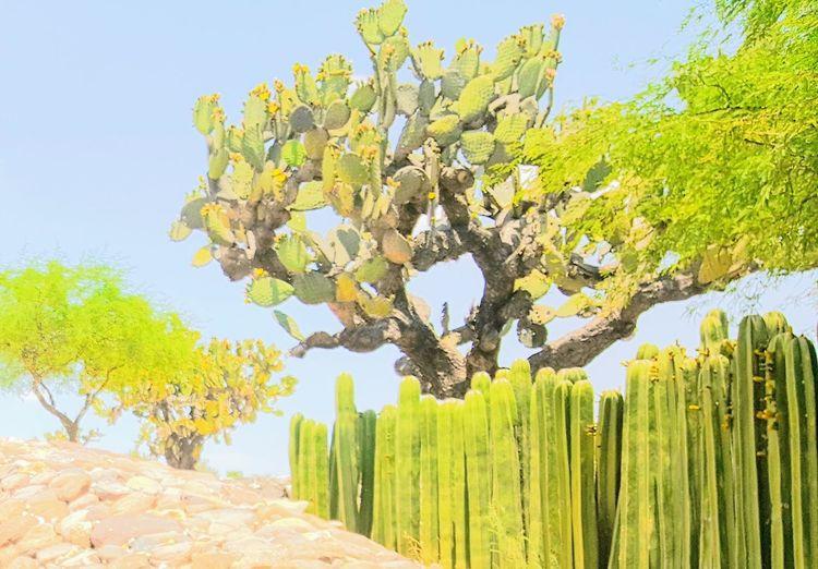 Cacti Hills