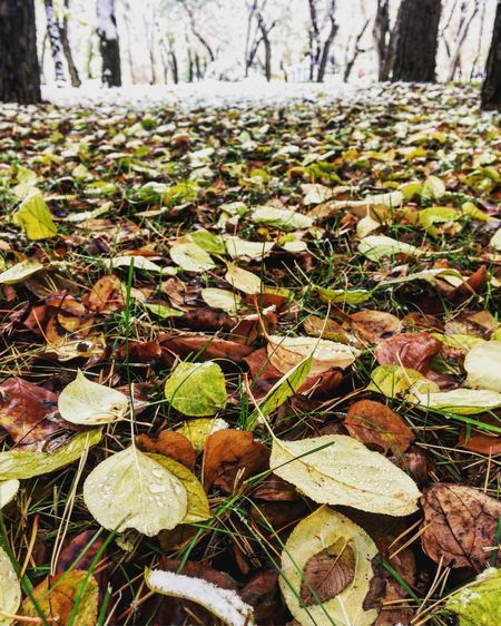Abundance Autumn Beauty In Nature Change Covering Day Dry Fallen Fallen Leaf Field Fragility Growth Large Group Of Objects Leaf Leaves Natural Condition Nature Non-urban Scene Outdoors Scenics Season  Tranquil Scene Tranquility Tree Trunk