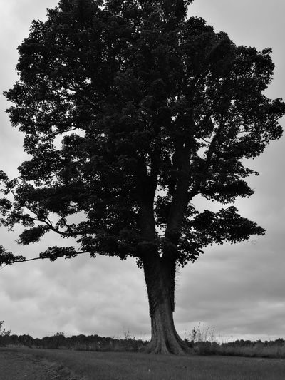 Hanging Out This Week On Eyeem The 00 Mission Taking Photos Fresh On Eyeem  Trees And Nature Walking Around Day Out Eyemphotography Black And White Photography Tree Tree_collection  Scottish Treescollection Hugging A Tree