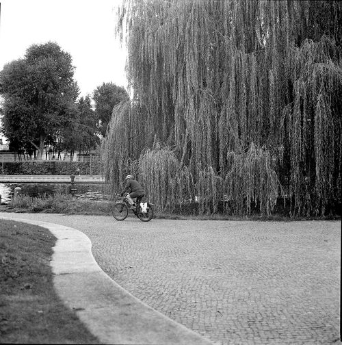 People riding bicycle on road in park