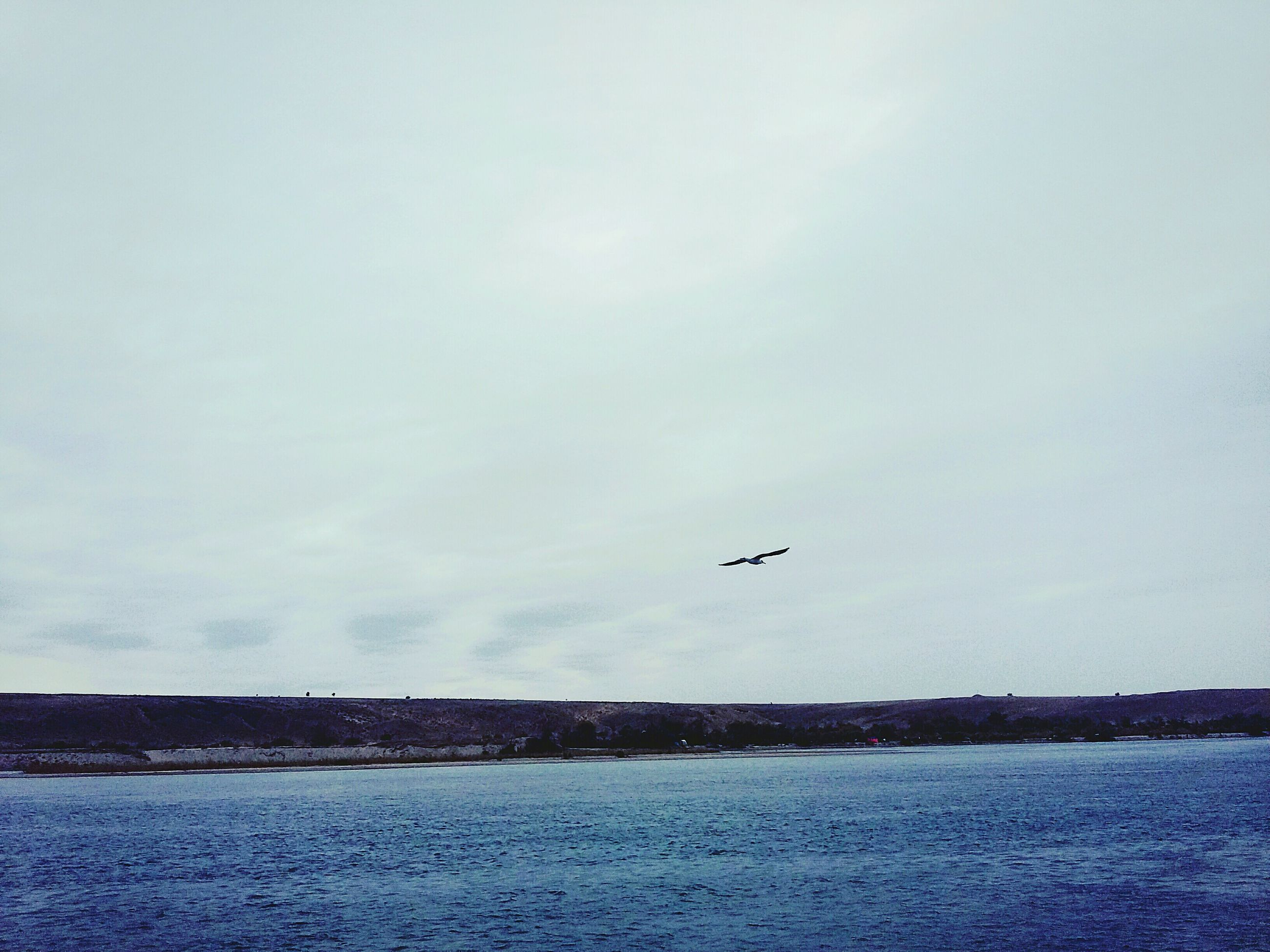 water, bird, flying, sea, scenics, tranquil scene, tranquility, animal themes, waterfront, sky, beauty in nature, nature, day, cloud, calm, outdoors, seascape, water surface, no people, ocean, remote, cloud - sky, coastline, non-urban scene