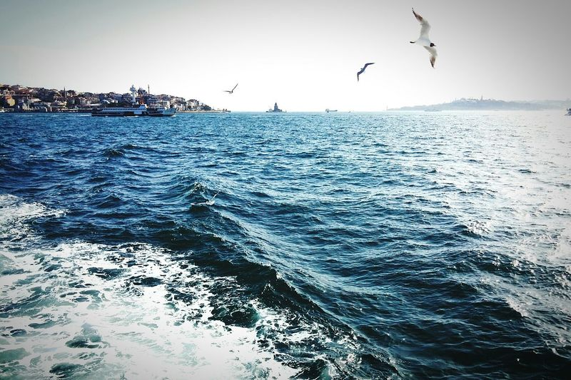Nature Landscape Sea Cityscape Bosphorus EyeEm Best Shots Seagull Steamship Hi! Check This Out
