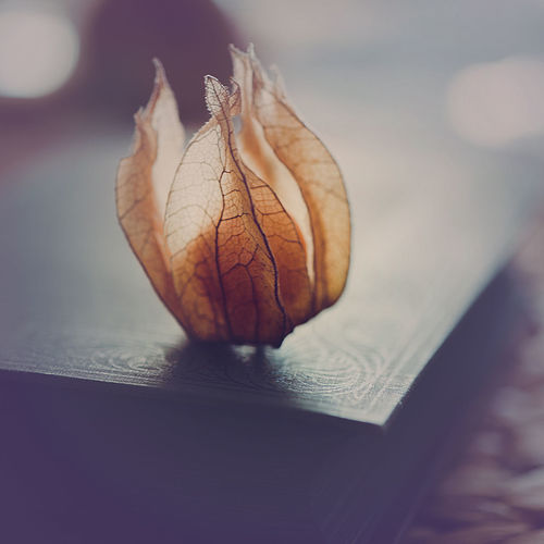 physalis on my book Close-up Indoors  Fragility Vulnerability  No People Physalis Fruit Food Slowfood Healthy Eating Moody Table Book