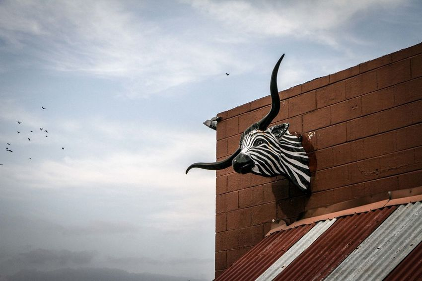 Animal Themes Art Art And Craft Creativity Environmental Conservation Exterior Longhorn No People Outdoors Safari Animals Sculpture Side View Statue Street Photography Streetphotography Striped Structure Texas Texas Skies Travel Traveling Vintage Zebra