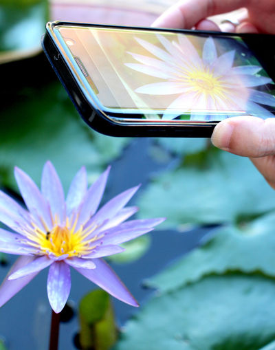 Purple lotus and yellow pollen and photography with mobile phones on holiday in Thailand. Lotus Thai Thailand Summer Travel Health Holiday Lifestyle Healthcare Lifestyle People Relax Recreation  Autumn Springtime Winter Technology Mobile Photography Colorful Human Hand Technology Wireless Technology Flower Communication Internet Holding Close-up Pollen Flower Head E-reader Touch Screen