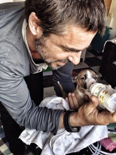 Feeding  Bull Terrier RePicture Love Pet Mascota What I Value Pet Portraits