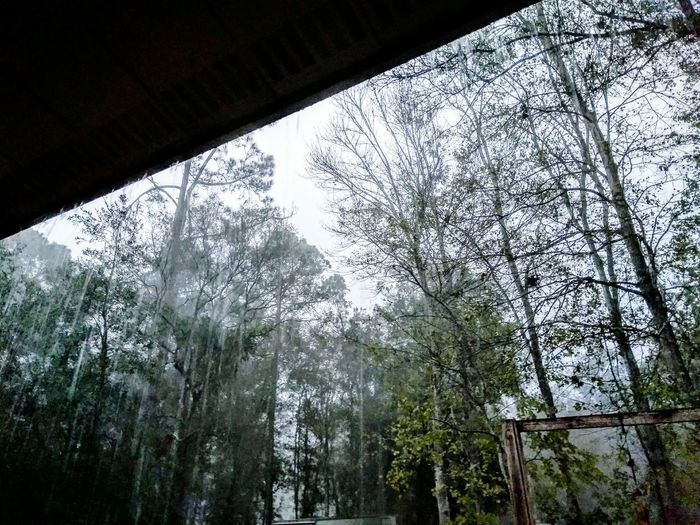 Have You Ever Seen The Rain Rainfall Tropical Climate December In Florida Humid Forest Photography Beauty In Nature First Eyeem Photo Nature