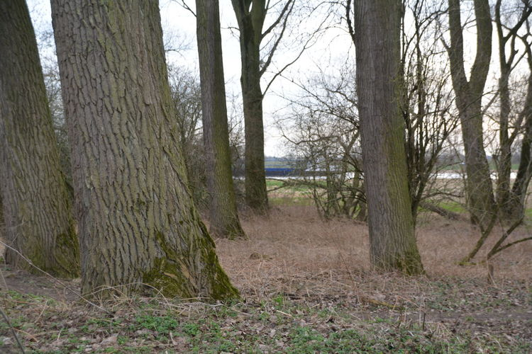 Beauty In Nature Day Forest Growth Landscape Lush - Description Nature Nature Reserve No People Non-urban Scene Outdoors Scenics Sky Tranquility Tree Tree Area Tree Trunk WoodLand