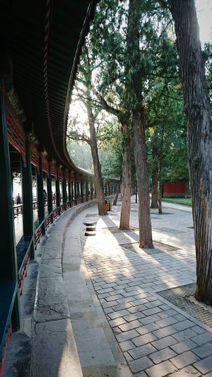 Tree Architecture History Chinese Architecture Ancient Civilization Travel Destinations Yiheyuan Beijing