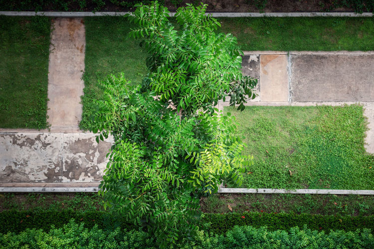 High angle view of plants growing in garden