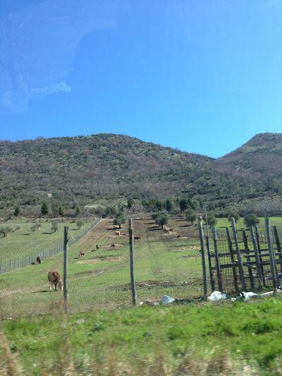 """""""A Costacciaro c'è il monte Zion"""" Horses Hello World Inviaggioversomammagigi"""
